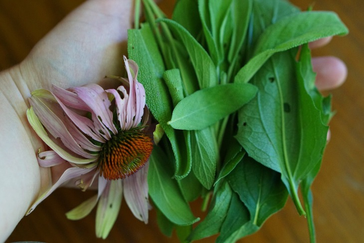 Sage and Echinacea Herbal Throat Spray – LET'S GET FRESH